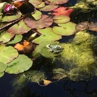 Frog in Barcelona 2