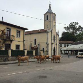 Our friend Carlos moving his cows through town