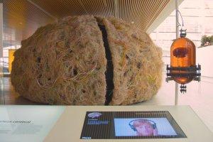 El_cerebro_humano.Museo_de_la_Evolución_Humana.Burgos_(4977100488)